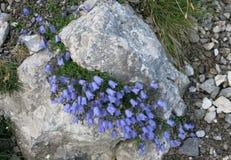 Fleurs de Wlid Photos libres de droits