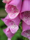Fleurs de Wlid Images stock