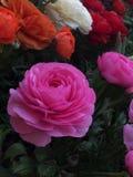 Fleurs de Wunderbare photo stock