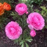 Fleurs de Wunderbare image stock