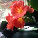 Fleurs de Wunderbare photo libre de droits