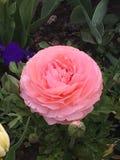 Fleurs de Wunderbare photographie stock libre de droits