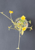 Fleurs de Y6ellow photos libres de droits