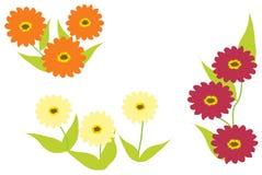 Fleurs de Zinnia dans trois couleurs Photos stock