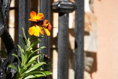 Fleurs derrière des barres photographie stock libre de droits