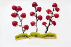 Fleurs des framboises Photographie stock libre de droits