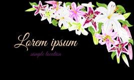 Fleurs des lis blancs et roses sur un fond noir pour des cartes Image stock