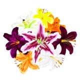 Fleurs des lis multicolores sur un fond blanc Photo libre de droits
