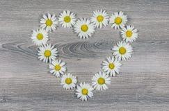 Fleurs des marguerites en forme de coeur Photo libre de droits