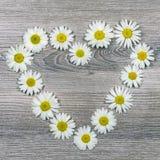 Fleurs des marguerites en forme de coeur Photographie stock
