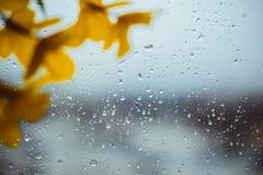 Fleurs des matériaux légers artificiels jaunes, fleurs jaunes d'acacia photos libres de droits