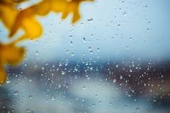 Fleurs des matériaux légers artificiels jaunes, fleurs jaunes d'acacia photographie stock