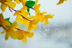 Fleurs des matériaux légers artificiels jaunes, fleurs jaunes d'acacia photo libre de droits