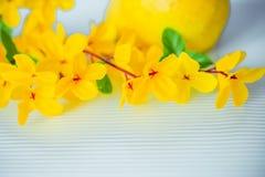 Fleurs des matériaux légers artificiels jaunes, fleurs jaunes d'acacia photographie stock libre de droits