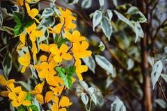 Fleurs des matériaux légers artificiels jaunes, fleurs jaunes d'acacia image libre de droits