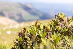 Fleurs des prés alpins Images stock