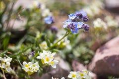 Fleurs des prés alpins Photographie stock libre de droits