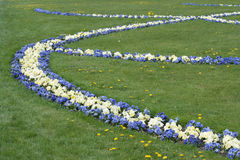 Fleurs des violettes dans le jardin de Mirabel. Photographie stock