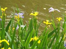 Fleurs devant l'eau image libre de droits