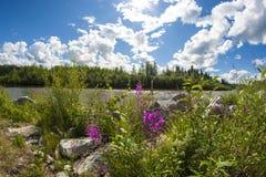 Fleurs devant le lac de forêt Photographie stock libre de droits