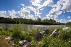 Fleurs devant le lac de forêt Image libre de droits