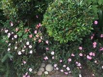 Fleurs dispersées minuscules Photos libres de droits