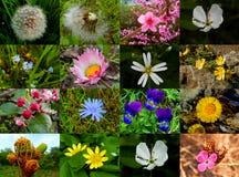 Fleurs diverses d'usine Image libre de droits