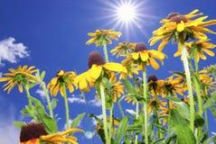 Fleurs du Colorado images libres de droits