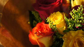 Fleurs du jour de mère dans le coucher du soleil Photo libre de droits