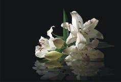Fleurs du lis et de leur réflexion dans l'eau Photographie stock