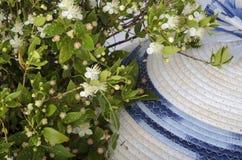 Fleurs du Myrte de la Sardaigne Image libre de droits