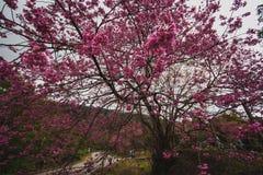 Fleurs du nord de la Thaïlande Photographie stock