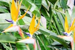 Fleurs du sud Photo libre de droits