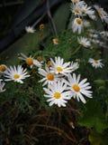 Fleurs en été image stock