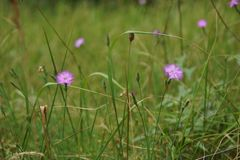 Fleurs en été photos stock