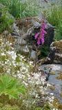 Fleurs en Alaska Images libres de droits