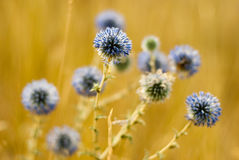 Fleurs en août Photographie stock