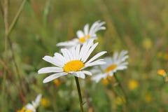 Fleurs en automne Photographie stock libre de droits