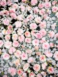 Fleurs en baisse photo libre de droits