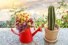 fleurs en boîte et cactus d'arrosage dans le pot de fleurs sur la table de marbre Image libre de droits