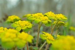 Fleurs en bois Photographie stock libre de droits
