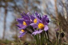Fleurs en bois. Photos libres de droits
