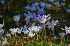 Fleurs en brise Photo stock