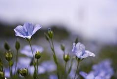 Fleurs en brise Photographie stock
