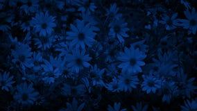 Fleurs en brise la nuit banque de vidéos