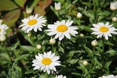 Fleurs en Bulgarie, année 2014 Photo libre de droits