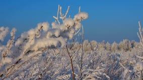 Fleurs en cristal en hiver clips vidéos