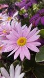 Fleurs en Espagne Image libre de droits