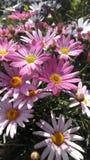 Fleurs en Espagne Photos libres de droits