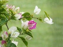 Fleurs en fleur Photos libres de droits